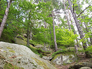 The natural beauty of Pulcinske Skaly