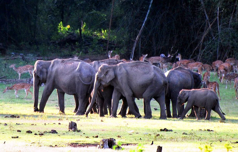Elephants and spotted deer by the Kabini River in Karnataka, India