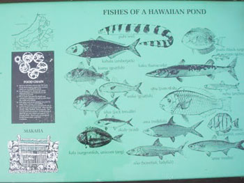 A chart showing some of the fish species in the ponds near the Waikoloa Resort