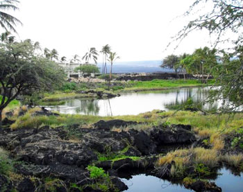 Exploring the native ecosystem and fishponds near the Waikoloa Resort