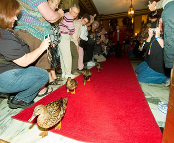 Peabody Duck Parade