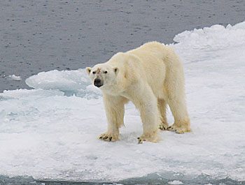 I awoke to find this is really the Land of the Ice Bear. Photos by Greg Roensch.