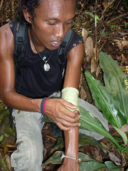 All of the tour guides have an extensive knowledge of the jungle and its uses.