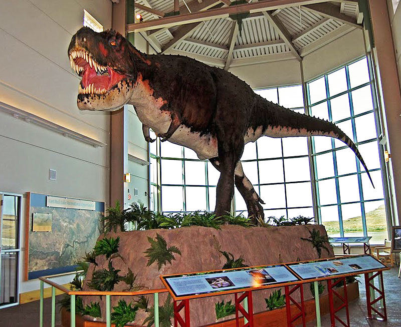Life-sized model of a tyrannosaurus rex at the Fort Peck Interpretive Center in Montana. Photo by Esha Samajpati.