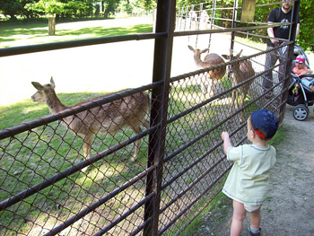 Kids fascinated by the animals, Chateau Gardens