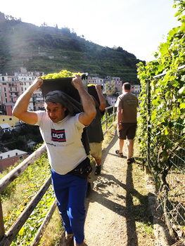 "Taking Manarola's ""Vineyard Walk"""