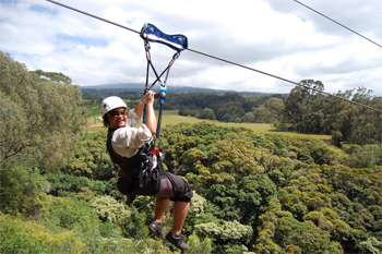 Hang loose on Maui on a zipline tour on the Piiholo Ranch.