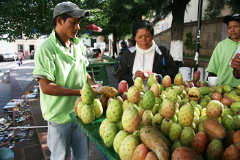 The high and dry environment surrounding the city hosts the perfect conditions for growing prickly pear fruit.