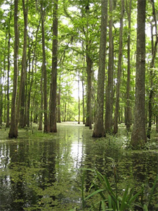 Louisiana's Cajun Coast: Canoeing and Cavorting in the Swamp