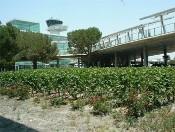 Even at the airport they grow grapes for wine. It's Bordeaux, for Gods sake!