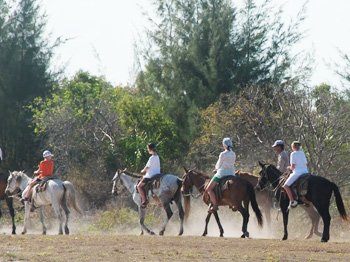 Horses on the final leg of their tour, heading for the ranch