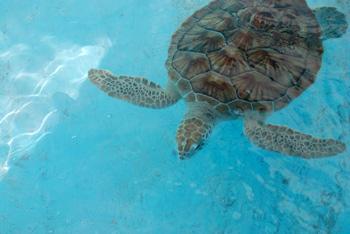Sea turtle farm called Granja de los Quelonios in the town of Isla Del Sol