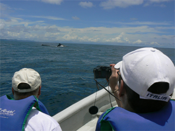 Open boat whale watching on Colombia's coast. photo by Max Hartshorne.