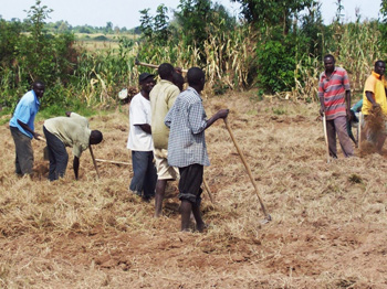 Locals working in the fields