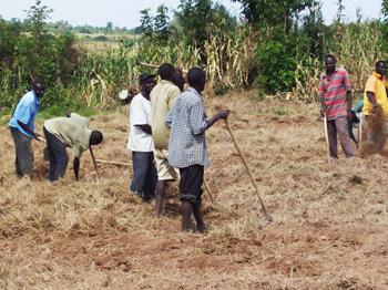 Locals working in the fields