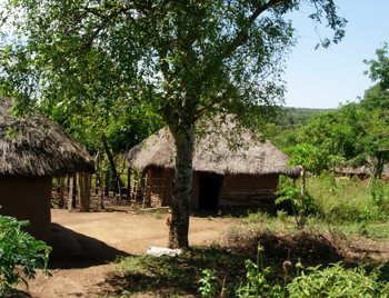 Traditional Luo homestead