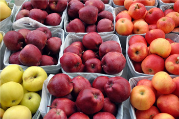 Local apples for sale at the Kamloops Farmers' Market. Photo by Robin Schroffel.