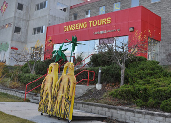 Ginseng tours at Sumore Ginseng Spa and Factory