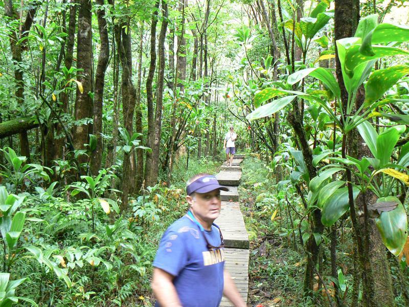 Pipiwai trail near Hana, Maui Hawaii.