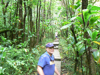 Pipiwai trail, en route to the waterfalls.