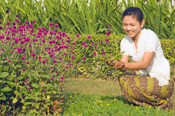 Picking flowers for table decoration at the Manohara Resort in Borobudur