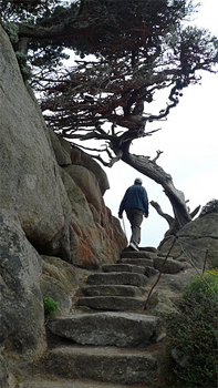 Point Lobos hiking trails.