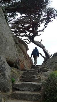 Point Lobos hiking trails.