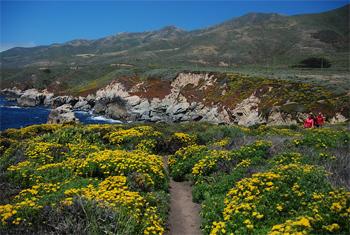 California's Central Coast: Nature vs Nurture 1