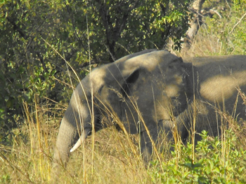Elephants on the run in the park.