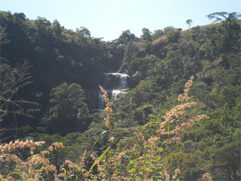 Gorongosa Park, Mozambique 1
