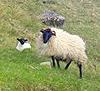 Boyle, County Roscommon, Ireland West