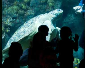 Kids admire Myrtle the Sea Turtle at the New England Aquarium.