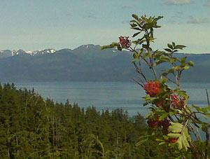 View from the ATV tour, part of the Icy Strait excursion