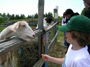 Forsythe Family Farms.