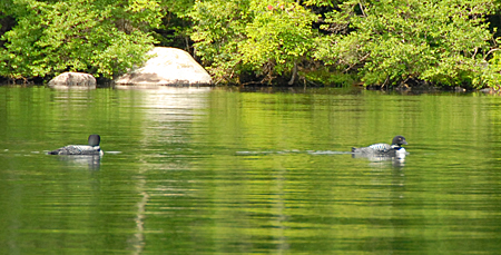 When we reached the cottage where the movie was filmed, a pair of loons came out to greet us.