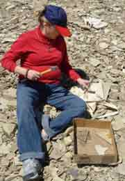 Splitting apart shale to find fossils in Republic