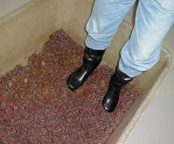 The raisins - called 'cibéby' are trampled and added to Tokay wine. Photo courtesy of J&J Ostrožovi?