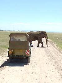 Elephant crossing the savannah. photos by Marie Javins.