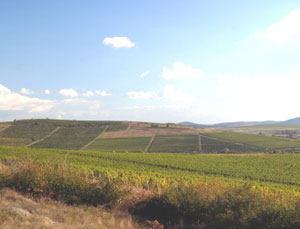 Vineyards in Eger