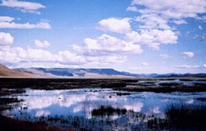 A Snake Safari in Northwest Nevada - GoNOMAD Travel