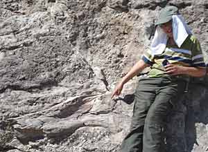 The author's son points to a dinosaur femur. Photos by Will Seigler