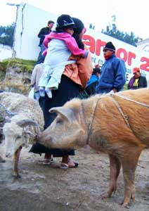 The Otavalo large animal market is a meeting point for people and livestock alike. Photos by Darrin Duford
