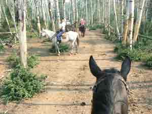 Riding a trail at the Triple J Guest Ranch, near Augusta, MT. photos by Max Hartshorne.