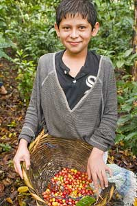 A boy in Nicaragua picking coffee - photos by Matthew Kadey