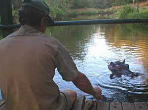 Jessica's keeper, Tonie Joubert, has no qualms about dangling his feet in the croc-infested river.