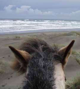 The ears of a horse on a beach in Chiloe, Chile