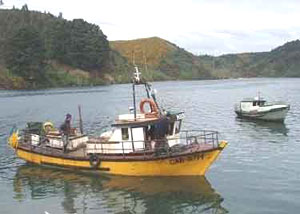 A boat in the harbor in Chiloe, Chile