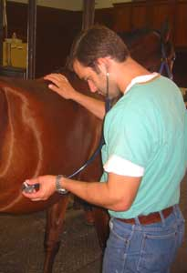 A veterinarian diagnoses a case of colic in a horse stabled at Mandolynn Hill Horse Farm in North Texas.