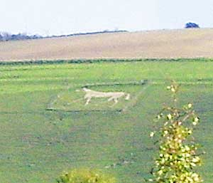 One of the famous White Horses of Wiltshire