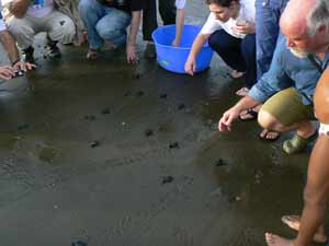 Releasing turtles into the sea in Colombia.